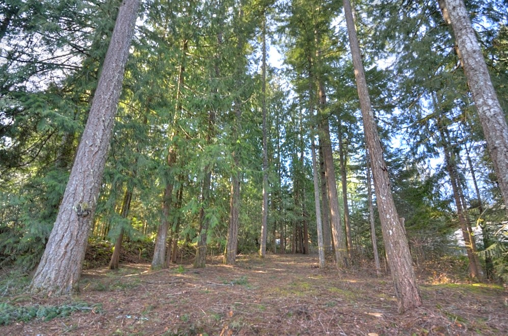 Buildable lot on the Sandy River, Brightwood, Oregon