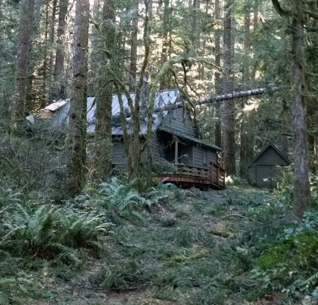 Tree on a cabin in Rhododendron oregon