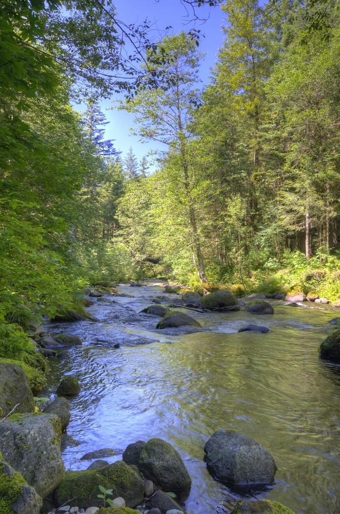 Still Creek in the Mt. Hood National Forest