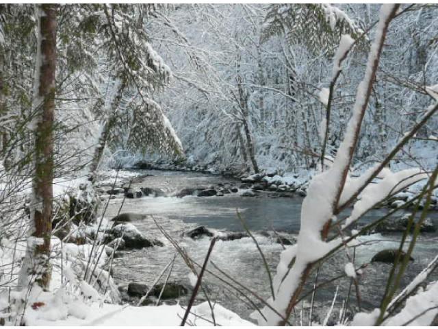 Still Creek on Mt. Hood