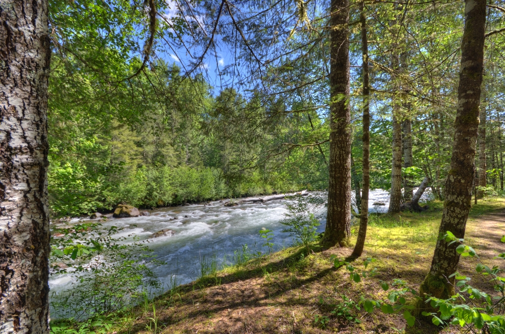 Along the banks of the Sandy River in Welches Oregon 97067