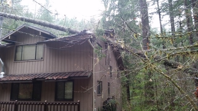 Mt. Hood National Forest Cabin in Rhododendron with Tree on it