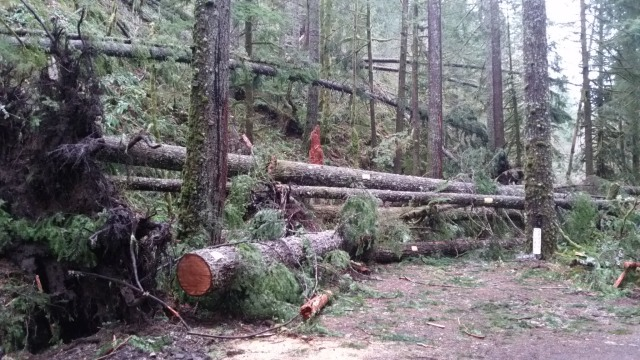 Mt. Hood National Forest Rhododendron Oregon Road 20 Storm Damage
