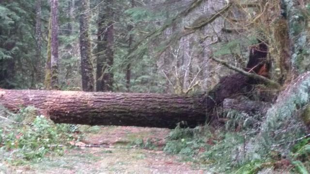 Mt. Hood National Forest storm damage